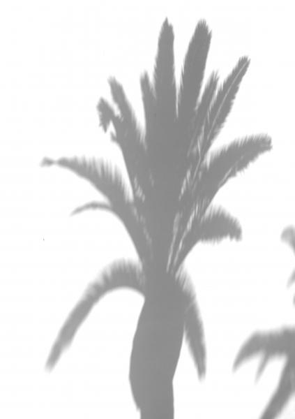 Schatten einer Palme